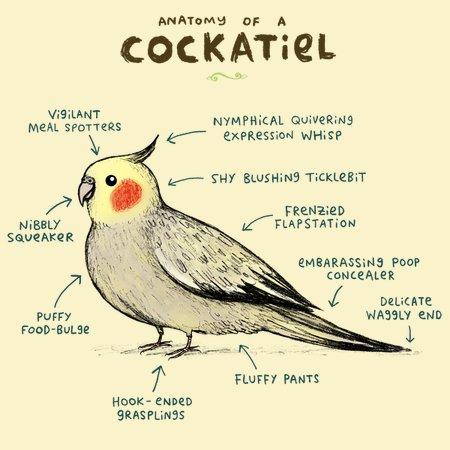 Anatomy Of A Cockatiel Neatoshop